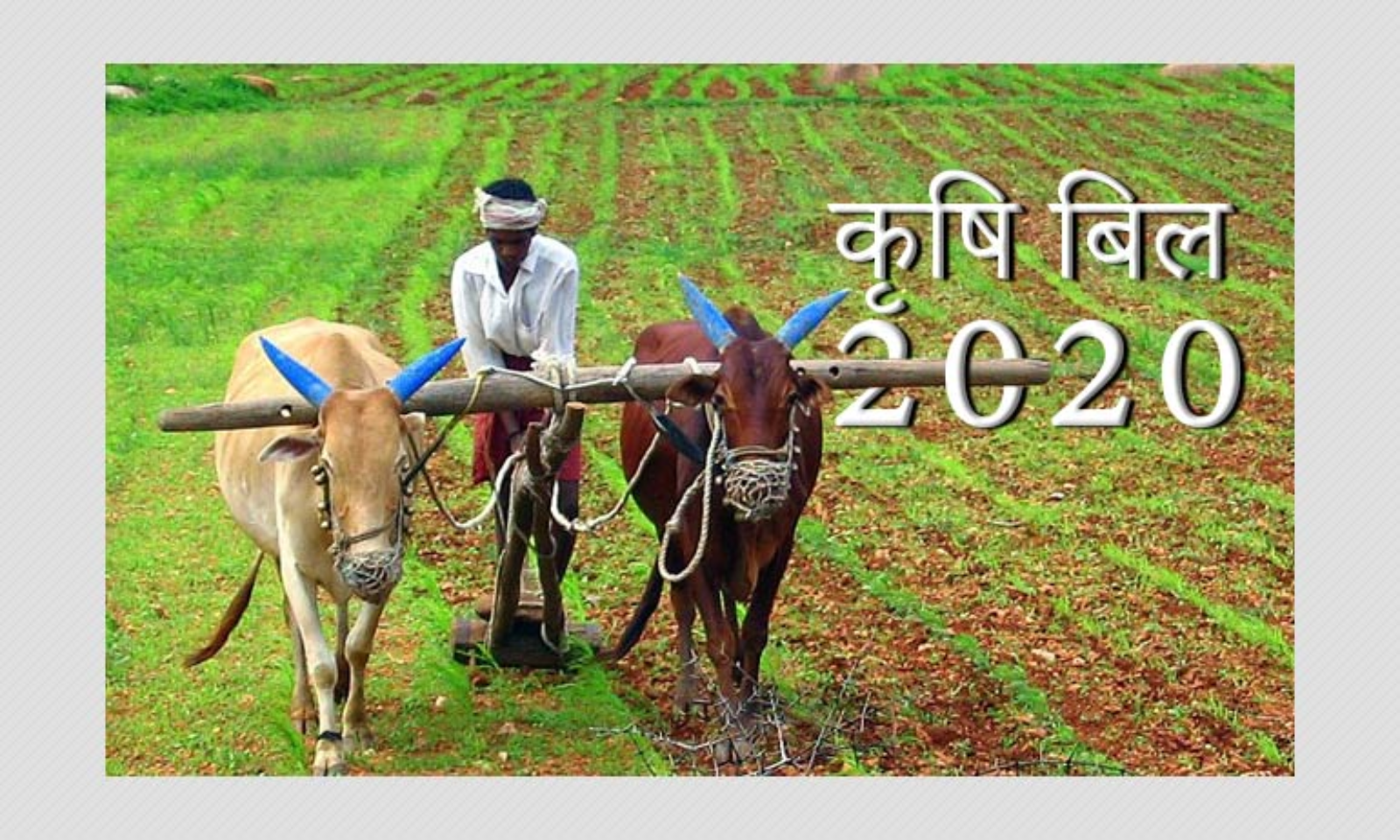 Protest-Farmer-For-the-krishi-bill-2020